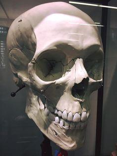 Skeleton Drawings, Skeleton Art, Anatomy Art, Anatomy Drawing, Tattoo Studio, Human Anatomy For Artists, Skull Reference, Totenkopf Tattoos, Animal Bones
