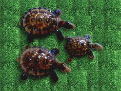 Set of 3 Wade Ceramic Tortoises Tortoises, Baby Items, Coupons, Ceramics, Ornaments, Ebay, Ceramica, Turtles, Pottery