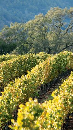 Free wine tastings every day? Sign us up! #California #Sonoma