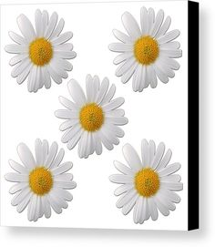 Spring Canvas Print by Muge Basak.  All canvas prints are professionally printed, assembled, and shipped within 3 - 4 business days and delivered ready-to-hang on your wall. Choose from multiple print sizes, border colors, and canvas materials.