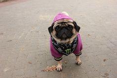 I didn't choose the Pug Life; the Pug Life chose me