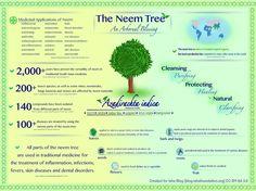 Benefits of Neem Infographic