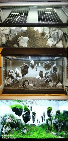 Magical world Aquascaping / Living Terrarium (WITH PHOTOS!), Page 1 – … – Beleuchtungsideen – Aquarium Aquarium Terrarium, Diy Aquarium, Planted Aquarium, Fish Tank Terrarium, Reptile Terrarium, Plant Fish Tank, Aquarium Aquascape, Aquarium Landscape, Betta Fish Tank