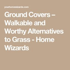 Ground Covers – Walkable and Worthy Alternatives to Grass - Home Wizards