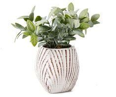 Find every day deals on home accents such as pillows, wall décor, art and more. Big Lots also carries seasonal home accents to decorate your home year round. Big Lots Store, Artificial Succulents, Succulent Pots, Dream Decor, Home Accents, Greenery, Color Pop, Glass Vase, Ceramics