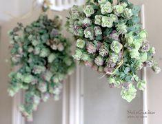 Cut Flowers, Dried Flowers, Garden Terrarium, Succulent Pots, Green Garden, Garden Styles, Natural Materials, Botanical Gardens, Flower Arrangements