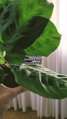 House Plants Decor, Plant Decor, Garden Plants, Indoor Plants, Household Plants, Apartment Plants, Low Light Plants, Plants Are Friends, House Plant Care