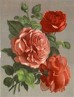 Mother's Day Vintage Postcards of Flowers Art Floral, Vintage Flowers, Vintage Floral, Flower Prints, Flower Art, Impressions Botaniques, Vintage Rosen, Illustration Botanique, Decoupage Vintage