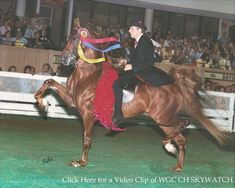 Mitchell Clark Stables - American Saddlebreds - Danville, Kentucky