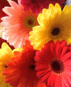 Gerbera Daisies. Gender: Feminine. Planet: Venus.Element: Water. Deities: Freya, Artemis, and Thor. Wear a daisy to attract love.
