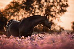 Beautiful Horse Pictures, Beautiful Horses, Animals Beautiful, Andalusian Horse, Friesian Horse, Cute Horses, Pretty Horses, Horse Markings, Horse World