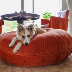 Since Suzy's is specialised in handmade products for dogs. We stand out with exclusive designs and exceptional quality. Designer Dog Carriers, Round Beds, Dog Cushions, Dog Furniture, Dog Design, Bean Bag Chair, Dog Beds, Luxury, Dogs