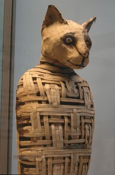 Cat mummies of the world - Google Search