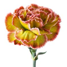 Carnation Drawing, Color Pallets, Carnations, Beautiful Flowers, Rose, Drawings, Florals, Plants, Wedding