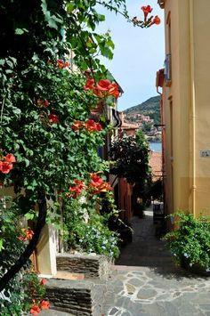 ruelle de Collioure (avec bignones en fleur ...)