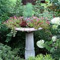 Upcycled an old, leaky birdbath into a beautiful succulent garden! I m… :: Hometalk
