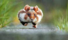 PHOTOS. Ce concours de photos d'animaux drôles est un vrai bêtisier de la nature