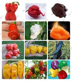24種類200野菜フルーツコショウ種子、ジャイアント唐辛子の種+ピーマン+カロライナreaper」+ホットチリ盆栽植物鉢植え