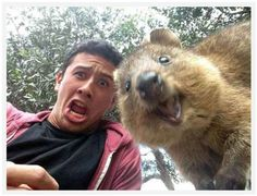 The guy who figured out that quokkas are surprisingly photogenic. | The 22 Most Perfectly Timed Selfies Ever Taken