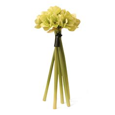 Discover the Herve Gambs Green Amaryllis Bouquet at Amara