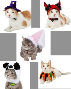 Halloween is for #cats too! Check out these cute Halloween inspired hats and bell collars from Grreat Choice at PetSmart! Now you cat can join the fun too.  http://twolittlecavaliers.com/2014/10/petsmart-fashion-every-season-fashionistaevents.html