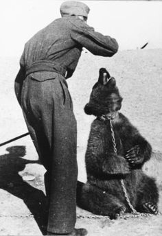 Wojtek (Voytek), a mascot bear of the 22nd Transport Artillery Company (Army Service Corps, 2nd Polish Corps) being fed by one of the Company's soldiers.