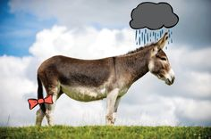 Eeyore | If Actual Animals Starred In The Winnie The Pooh Movie