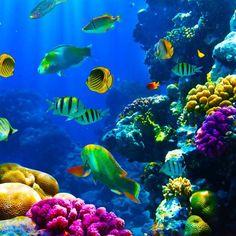 les profondeurs de l'océan, des coraux et des poissons en couleurs magnifiques
