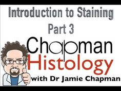 3 Min Histology Intro To Staining 3 - YouTube