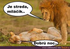 Funny Memes, Jokes, Need For Speed, Viera, Humor, Lion, Animals, Leo, Animales