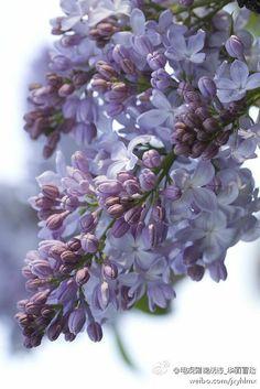 电视剧锦绣缘_华丽冒险:紫藤的花语:沉迷的爱。代表人物前田泷一。