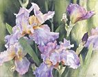 Nancy Tichborne, renowned for her exquisite watercolours. New Zealand.