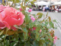 #RoseFestival ;-) http://1picture1word.com/2015/05/31/rose-festival/… #1P1W