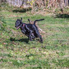 Savannah chases Max