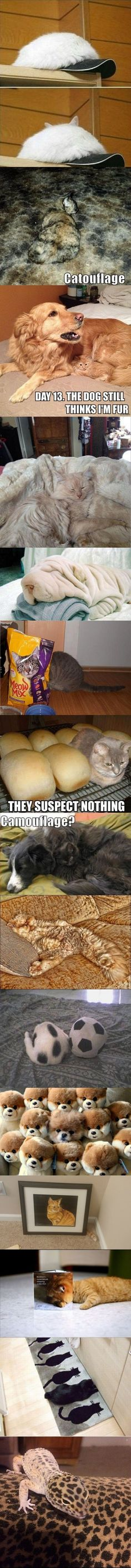 They suspect nothing!! - Imgur