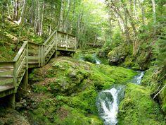 Dickson Falls, Fundy National Park, New Brunswick, Canada photo