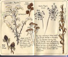 nature journal. e.g. things in my yard