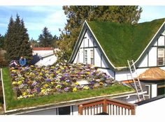 Why And How To Install A Green Roof
