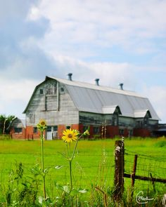 Old Country Barn by CMartin in Stl
