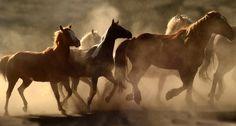 equine photography - Google-Suche