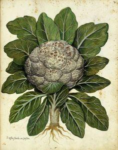 Botanical - Fruits, Vegetables, Other Ingestables