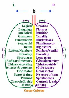 Right brain / Left brain. Repinned by SOS Inc. Resources. Follow all our boards at http://Pinterest.com/sostherapy for therapy resources.