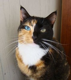 Pretty unusual kitty