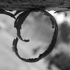 Letters In Nature | out of Letter Photography - Black and White Letter Photos, Nature ...