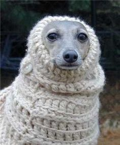 My pit would so wear this in the winter. He'd probably prefer something more...masculine, though.