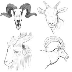 A grand fuck-ton of goat references. (Be weary of the breed of goat your drawing; face length and horn type differ immensely.)