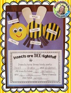 Insects Are BEE-lightful --- Insect Labeling and Writing Craftivity! This set includes everything you need to create this adorable craftivity and let your students Show What They Know! It also makes a wonderful Spring bulletin board display! First Grade Science, Kindergarten Science, Teaching Science, Spring Bulletin Boards, Bulletin Board Display, Insect Crafts, Bee Crafts, Bugs And Insects, Science Projects