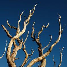 Dead Tree nr Crinan #archive #landscapelover #landscape_captures #landscapes #landscape_photography #landscape_lovers #ig_landscape #splendid_earth #artphotography #way2ill #thegreatoutdoors #wildernessculture #sunset_vision #acolorstory #fujifilm #xt2 #repostmyfujifilm #fuji #OSmaps #explore #visitscotland #scotspirit #lovescotland