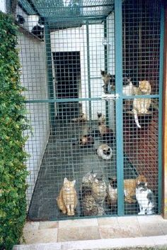 56 ideas for cats house outdoor Outdoor Cat Cage, Outdoor Cat Enclosure, Outdoor Cats, Hotel Gato, Cat Hotel, Cat Habitat, Cat Fence, Cat Cages, Cat Playground
