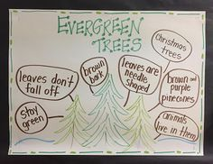 January and Winter Evergreen Trees - Writing and Science